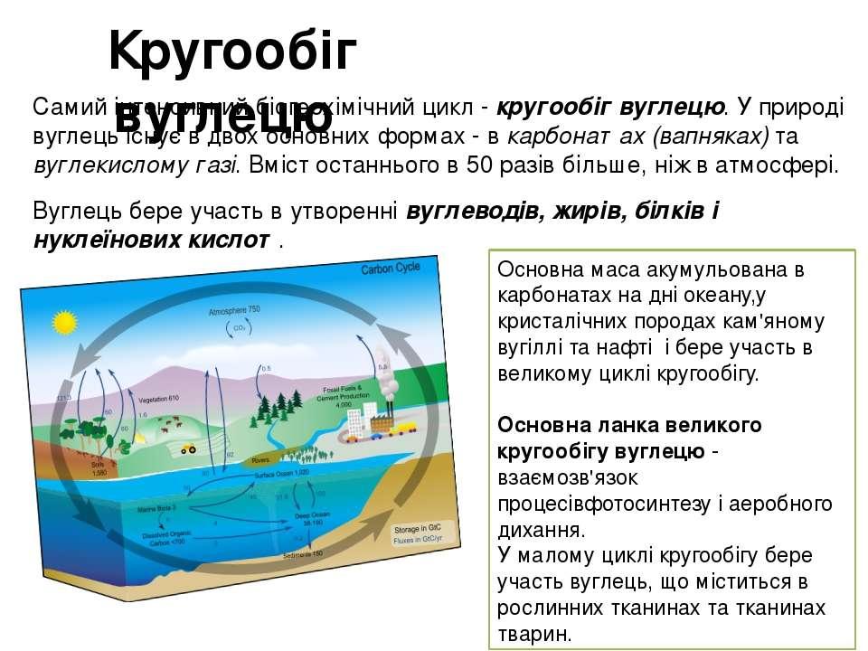Кругообіг вуглецю Самий інтенсивний біогеохімічний цикл - кругообіг вуглецю....
