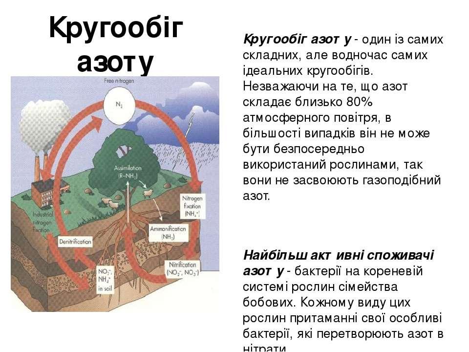 Кругообіг азоту Кругообіг азоту - один із самих складних, але водночас самих ...