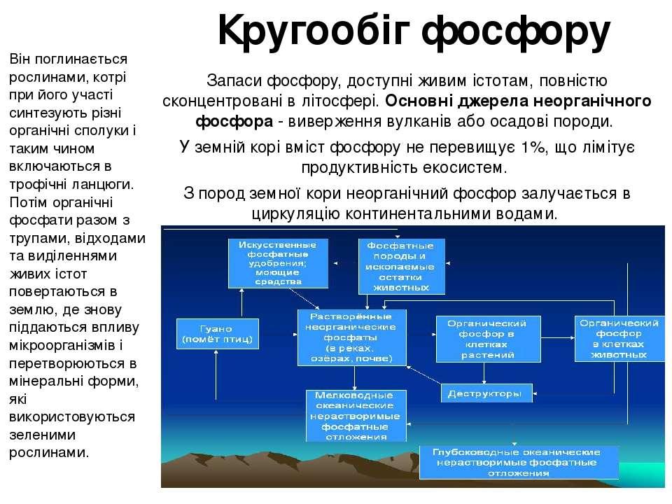 Кругообіг фосфору Запаси фосфору, доступні живим істотам, повністю сконцентр...