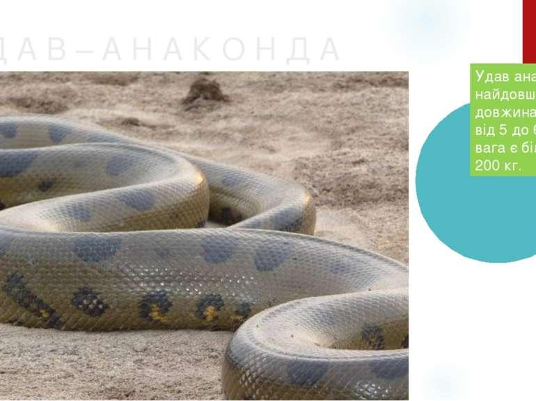 У Д А В – А Н А К О Н Д А Удав анаконда – найдовша змія [ії довжина сягає від...