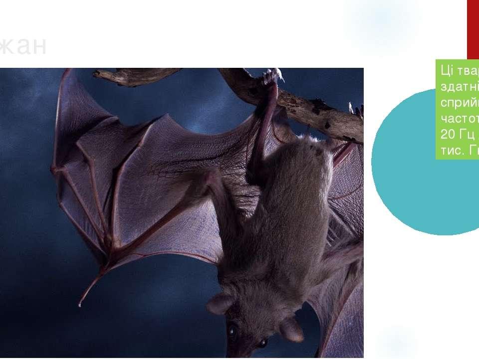 Кожан Ці тварини здатні сприймати частоти від 20 Гц до 150 тис. Гц. .