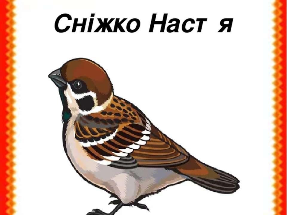 Сніжко Настя