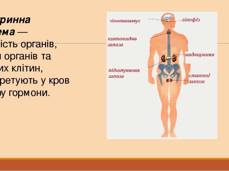 Ендокринна система— сукупністьорганів, частин органів та окремих клітин, як...