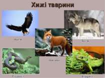 Хижі тварини 4 А.С. Василевська