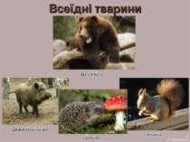 Всеїдні тварини 5 А.С. Василевська