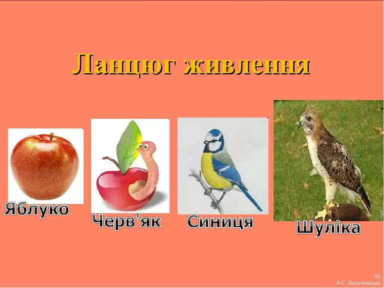 Ланцюг живлення 16 А.С. Василевська
