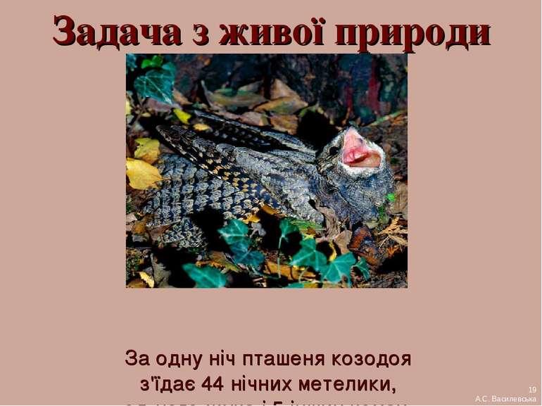 Задача з живої природи За одну ніч пташеня козодоя з'їдає 44 нічних метелики,...