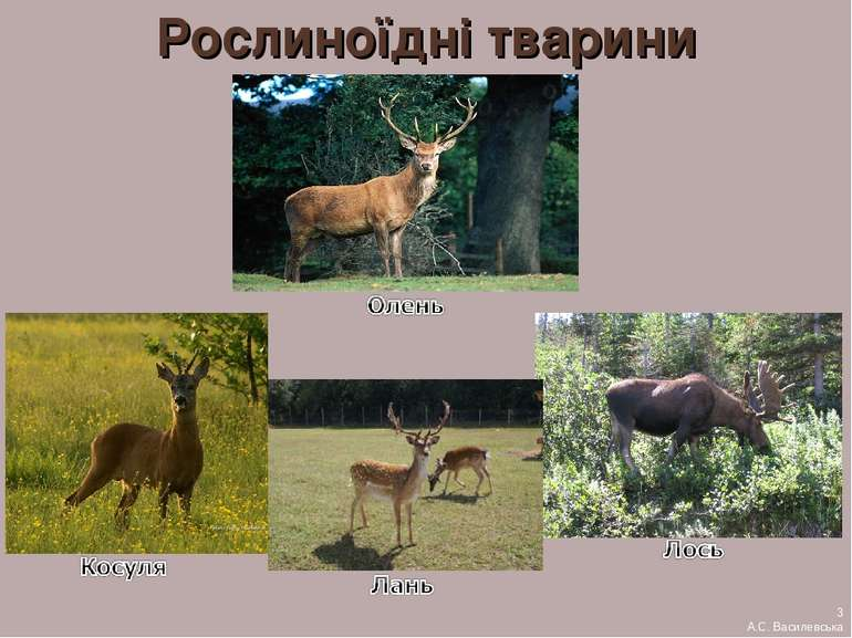 Рослиноїдні тварини 3 А.С. Василевська