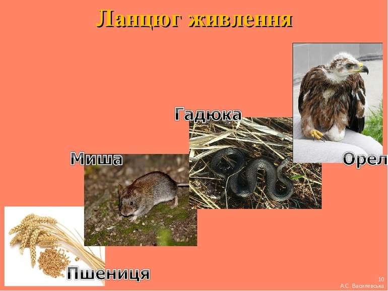 Ланцюг живлення 10 А.С. Василевська