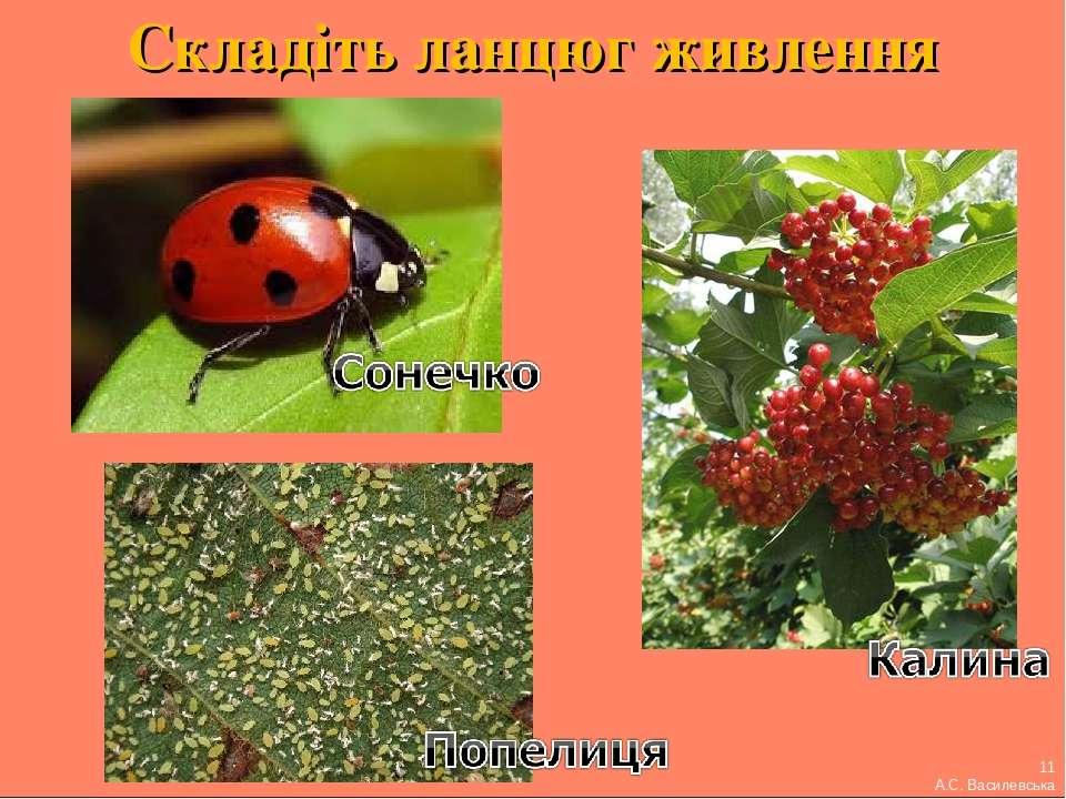 Складіть ланцюг живлення 11 А.С. Василевська