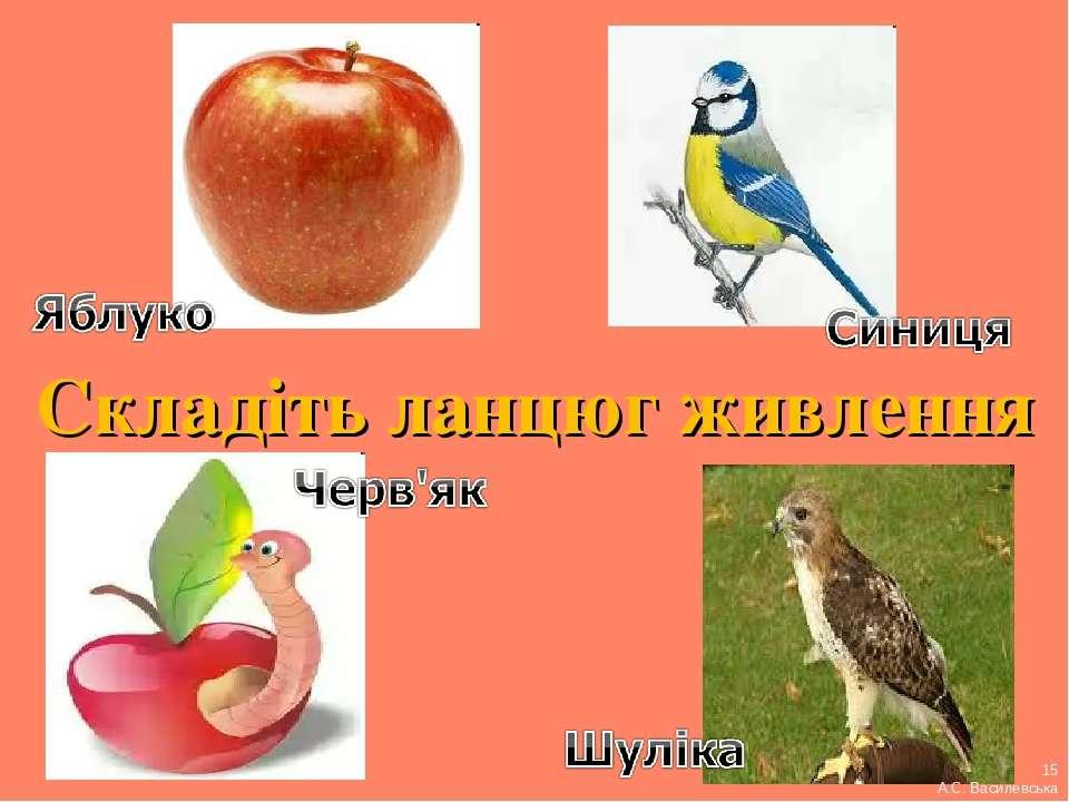 Складіть ланцюг живлення 15 А.С. Василевська