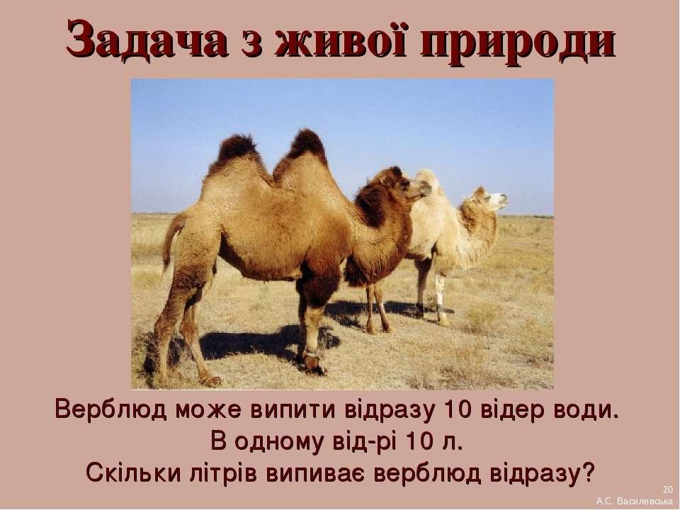 Задача з живої природи Верблюд може випити відразу 10 відер води. В одному ві...