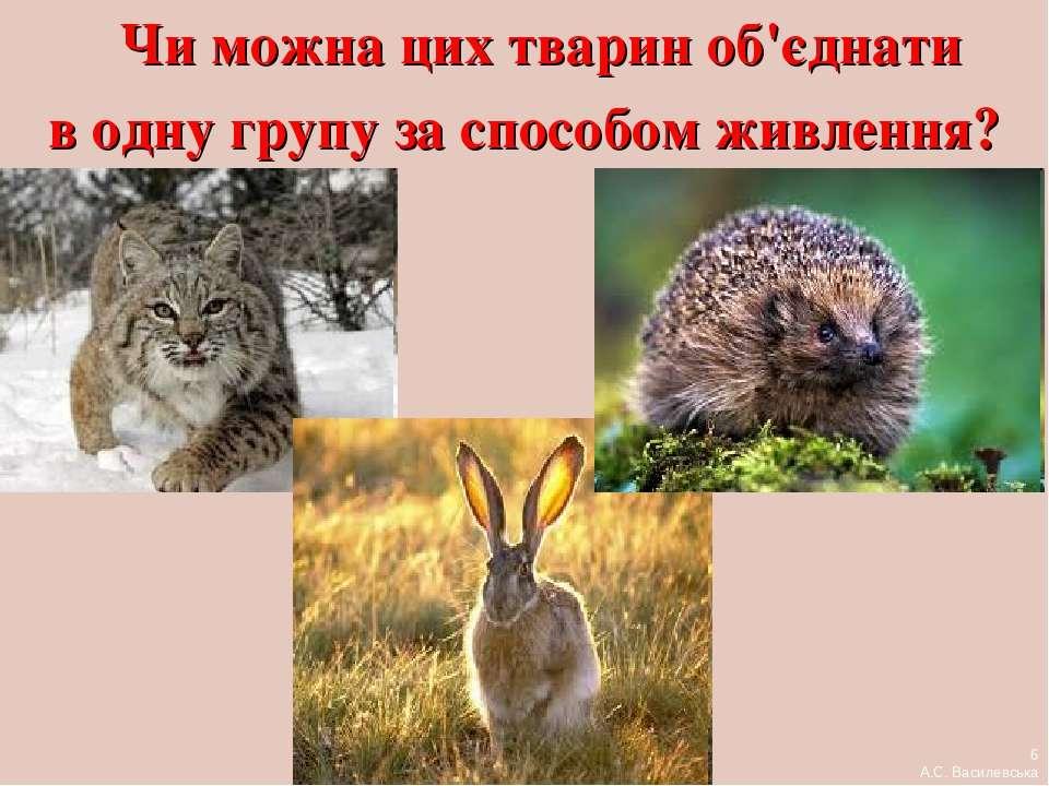Чи можна цих тварин об'єднати в одну групу за способом живлення? 6 А.С. Васил...