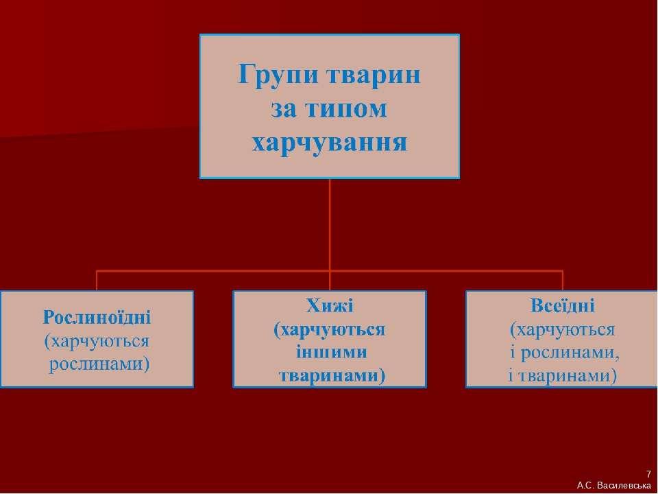 7 А.С. Василевська