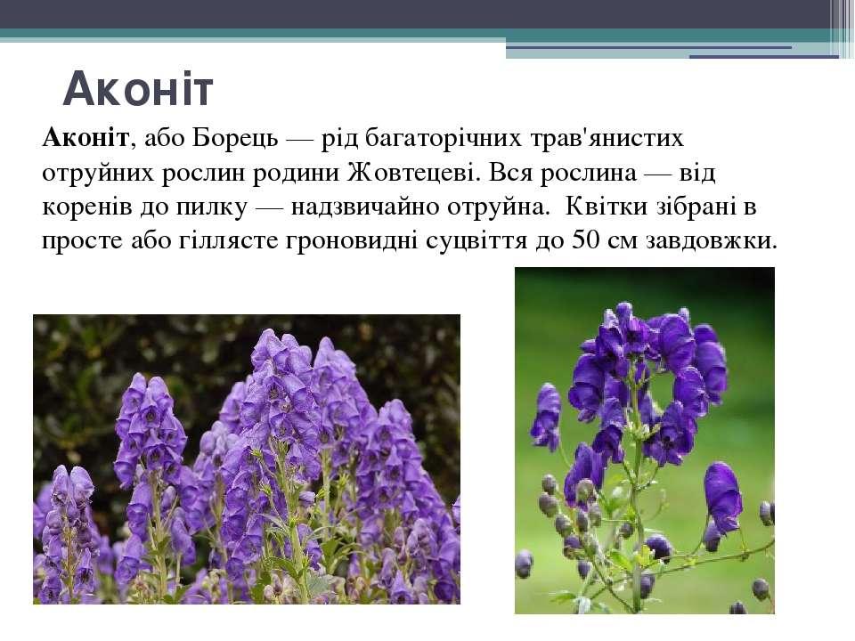 Аконіт Аконіт, або Борець — рід багаторічних трав'янистих отруйних рослин род...