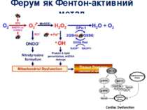 Ферум як Фентон-активний метал