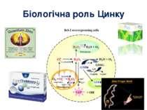 Біологічна роль Цинку