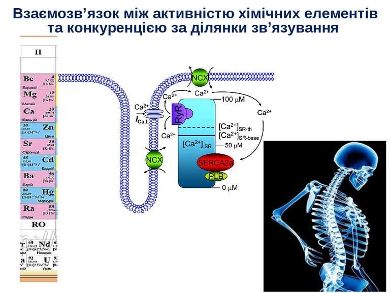 Взаємозв'язок між активністю хімічних елементів та конкуренцією за ділянки зв...