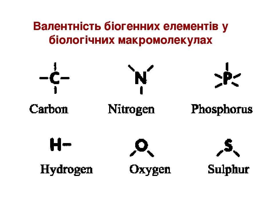 Валентність біогенних елементів у біологічних макромолекулах