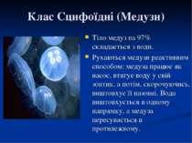 Клас Сцифоїдні (Медузи) Тіло медуз на 97% складається з води. Рухаються медуз...