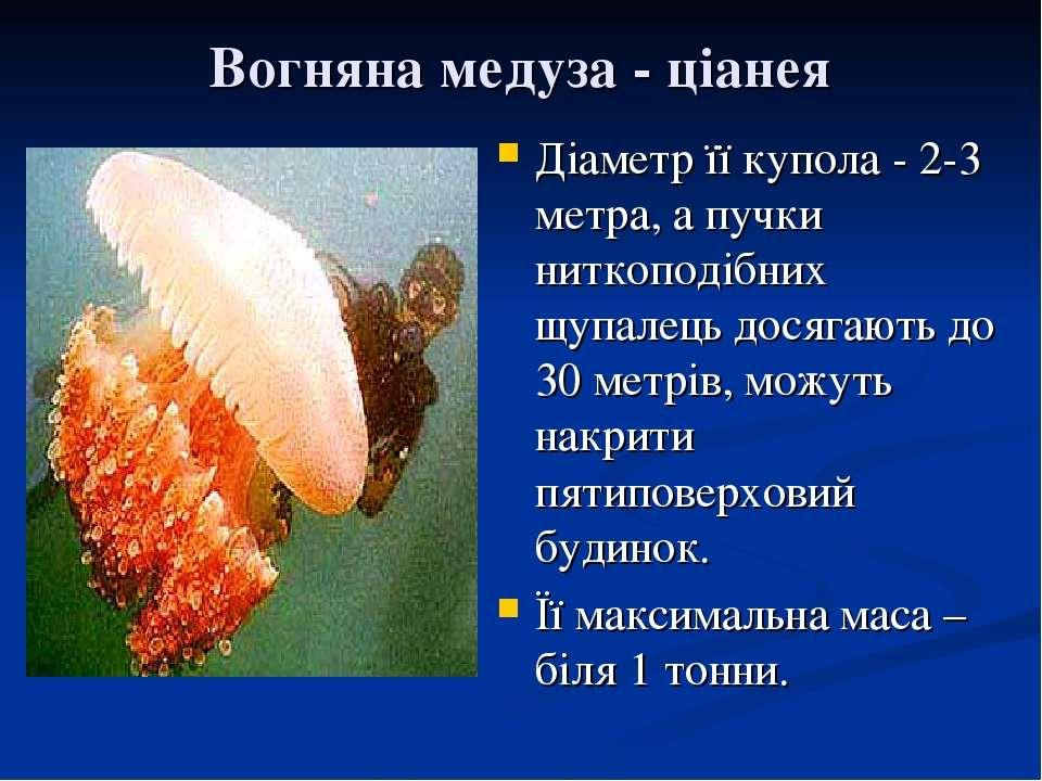 Вогняна медуза - ціанея Діаметр її купола - 2-3 метра, а пучки ниткоподібних ...