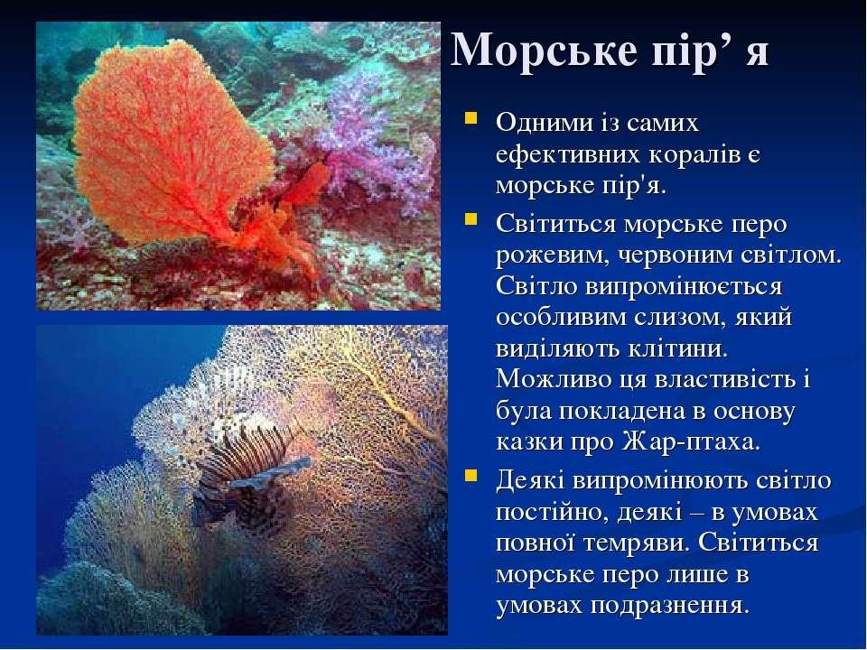 Морське пір' я Одними із самих ефективних коралів є морське пір'я. Світиться ...