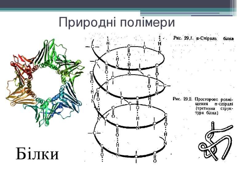 Природні полімери Білки