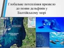 Глобальне потепління призвело до появи дельфінів у Балтійському морі