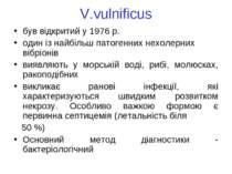 V.vulnificus був відкритий у 1976 р. один із найбільш патогенних нехолерних в...