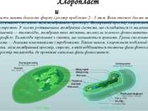 Хлоропласти мають довгасту форму і розмір приблизно 2—5 мкм. Вони оточені дво...