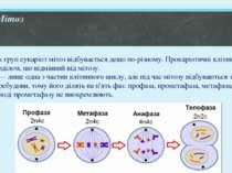 Мітоз У різних груп еукаріот мітоз відбувається дещо по-різному. Прокаріотичн...
