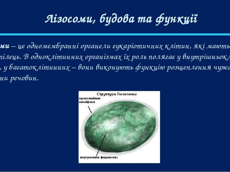 Лізосоми, будова та функції Лізосоми – це одномембранні органели еукаріотични...