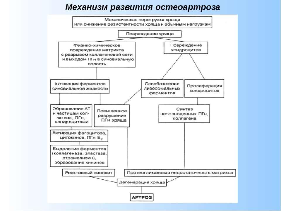 Механизм развития остеоартроза