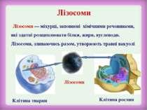 Лізосоми Клітина тварин Клітина рослин Лізосоми Лізосоми — міхурці, заповнені...