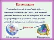 Цитоплазма Усередині клітини міститься в'язкий вміст — цитоплазма, що складає...