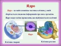 Ядро Ядро - це найголовніша частина клітини, у якій зберігається спадкова інф...