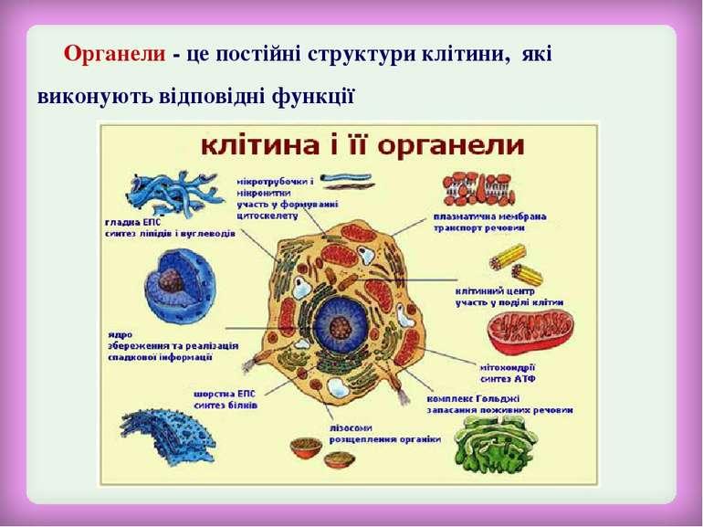 Органели - це постійні структури клітини, які виконують відповідні функції