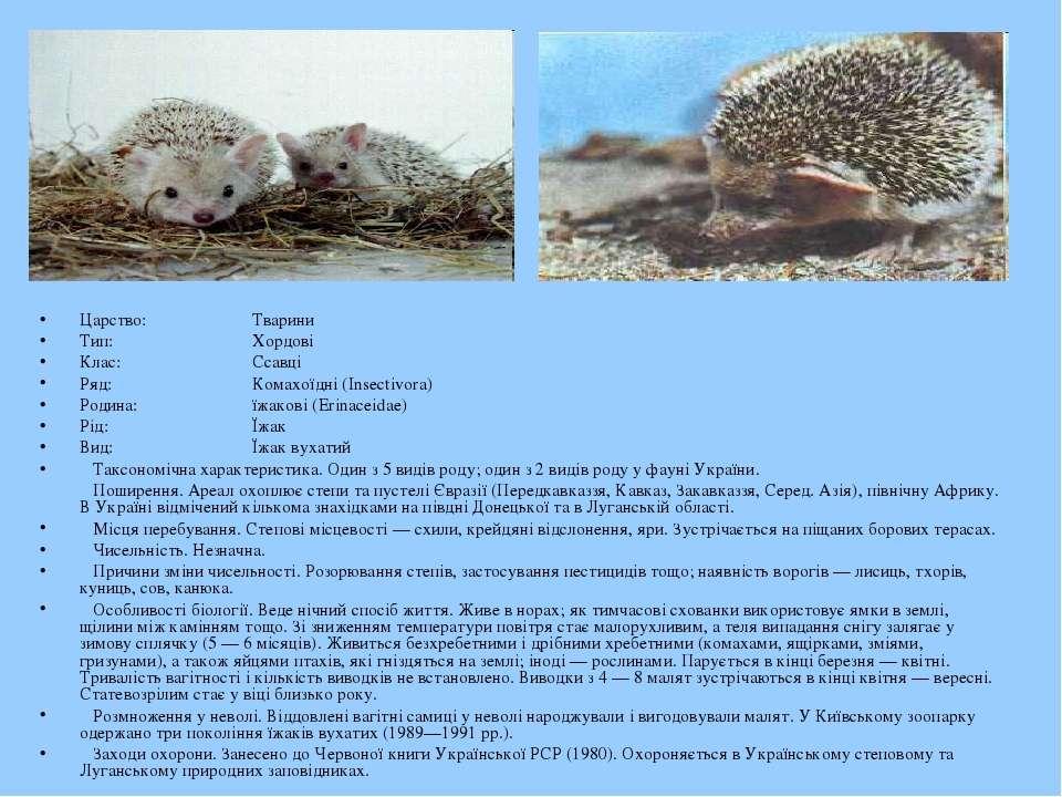 Царство: Тварини Тип: Хордові Клас: Ссавці Ряд: Комахоїдні (Insectivora) Роди...