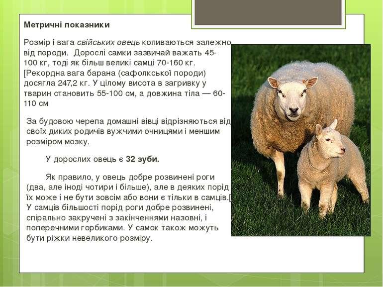 Метричні показники Розмір і вагасвійських овецьколиваються залежно від поро...
