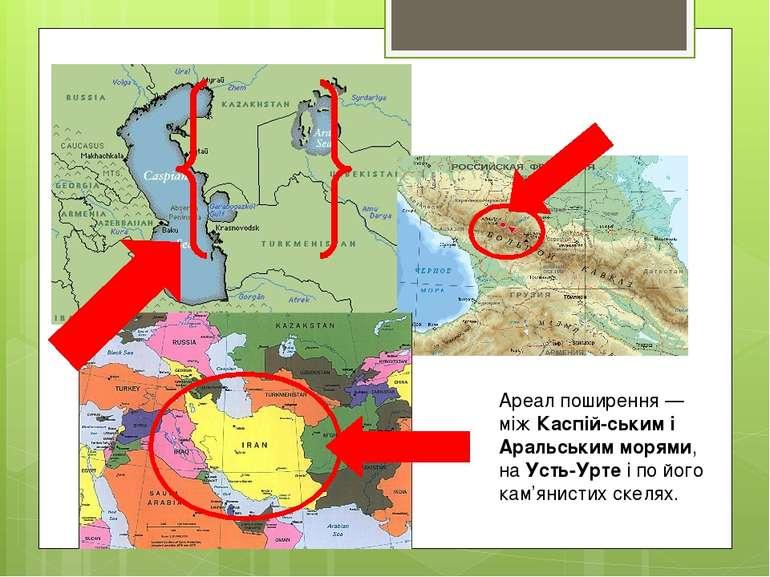 Ареал поширення — між Каспій ським і Аральським морями, на Усть-Урте і по йог...