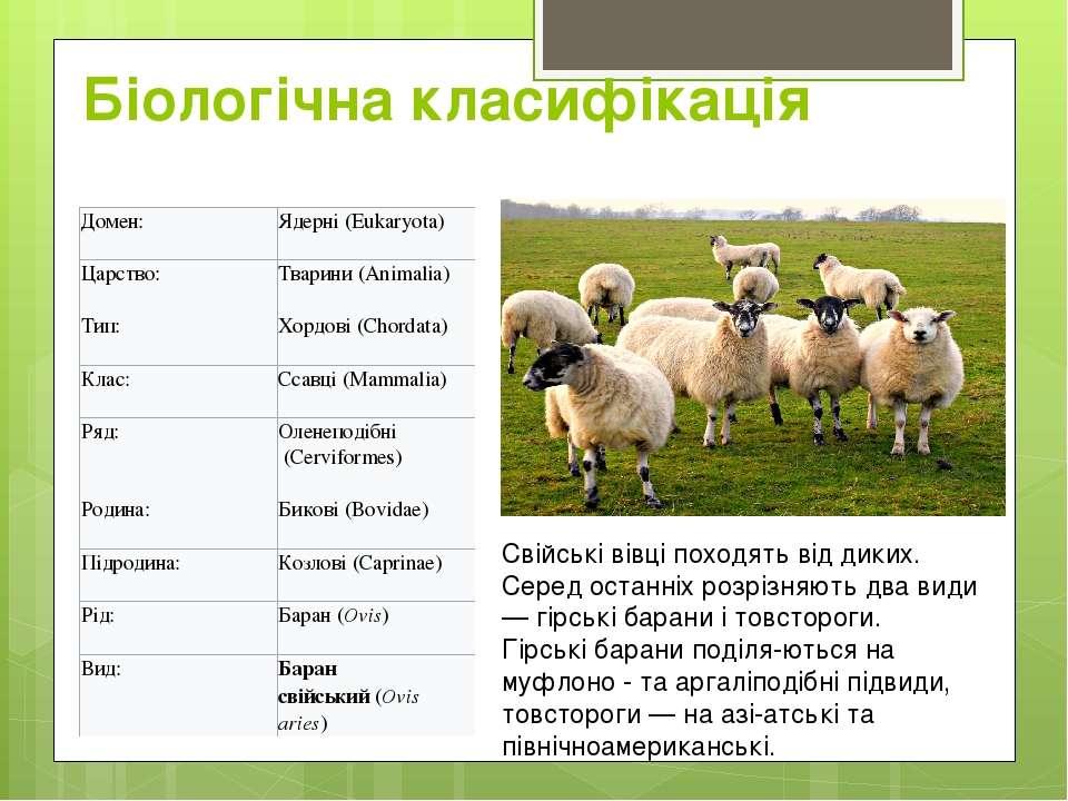 Біологічна класифікація Свійські вівці походять від диких. Серед останніх роз...
