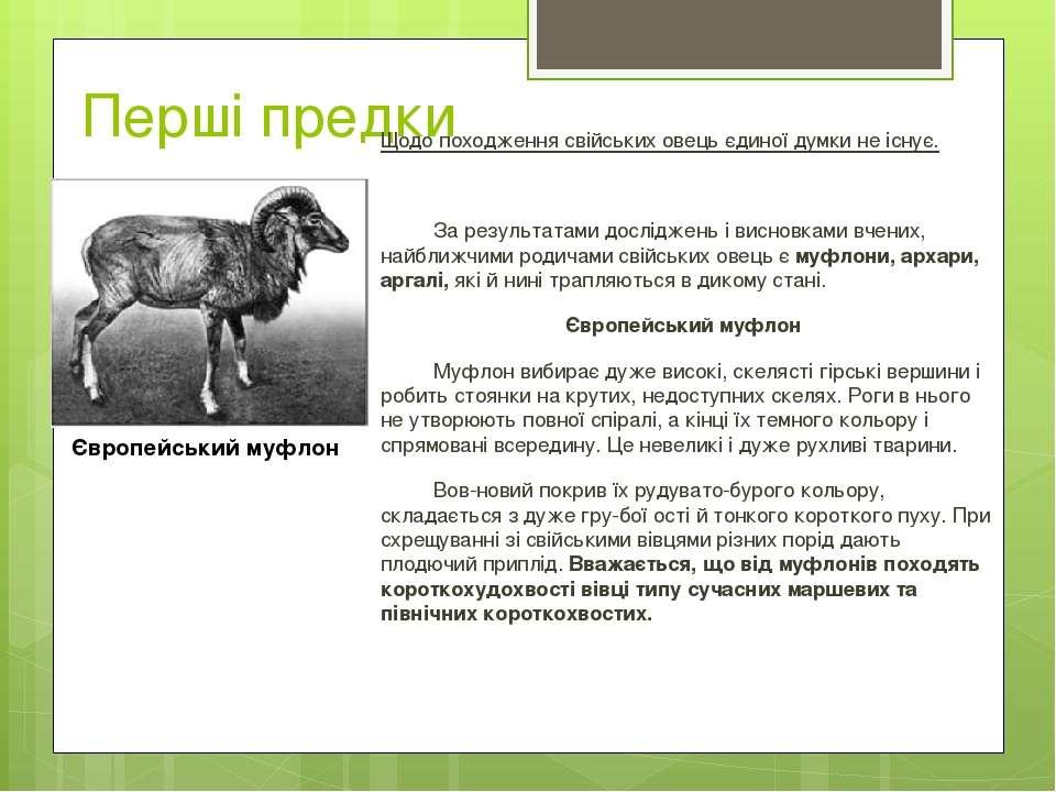 Перші предки Щодо походження свійських овець єдиної думки не існує. За резуль...