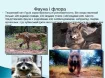 Тваринний світ Грузії характеризується різноманітністю. Він представлений біл...