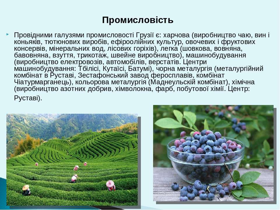 Провідними галузями промисловості Грузії є:харчова(виробництво чаю, вин і к...