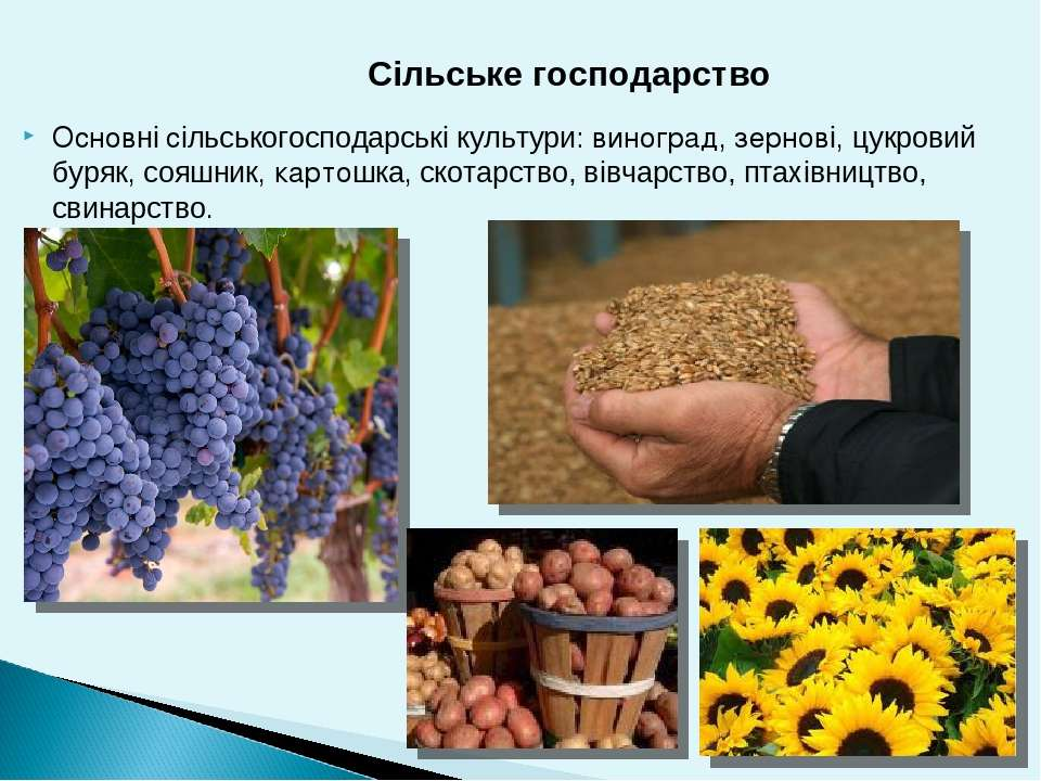 Основні сільськогосподарські культури: виноград, зернові, цукровий буряк, соя...