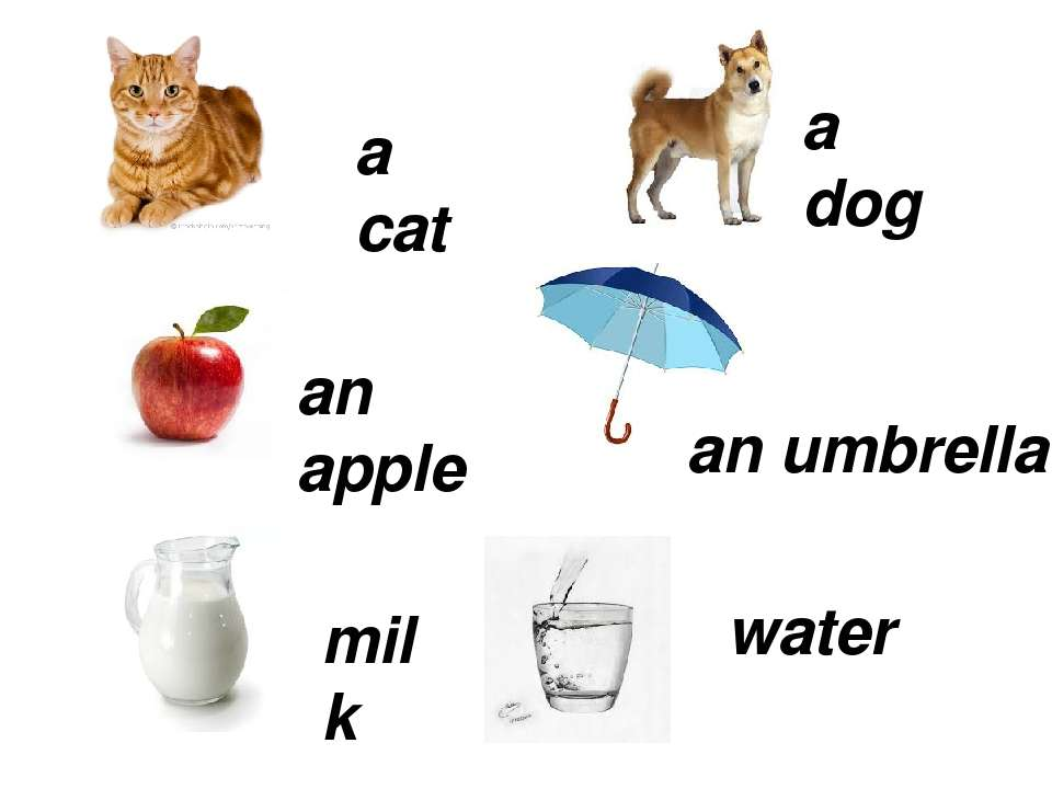 a cat a dog an apple an umbrella milk water