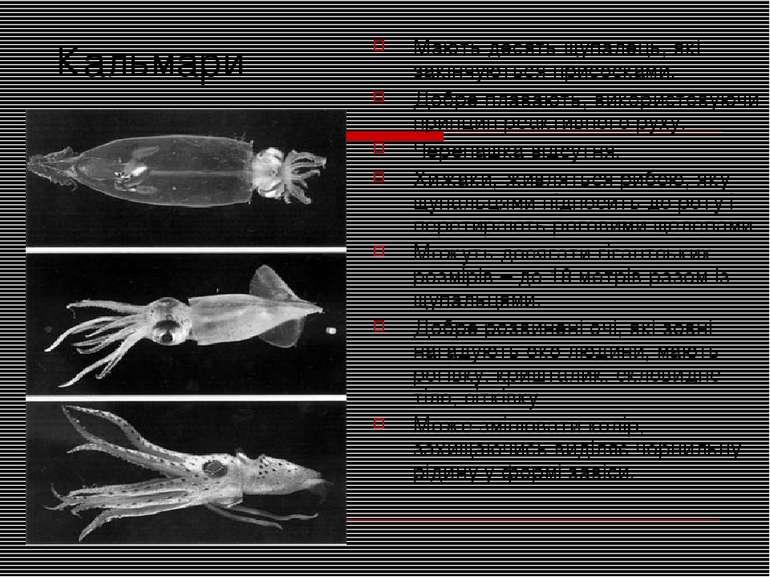Кальмари Мають десять щупалець, які закінчуються присосками. Добре плавають, ...