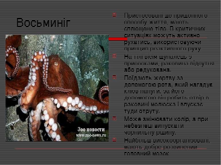 Восьминіг Пристосовані до придонного способу життя, мають сплющене тіло. В кр...