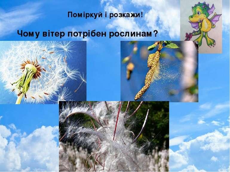 Поміркуй і розкажи! Чому вітер потрібен рослинам?