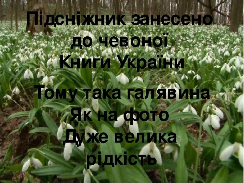 Підсніжник занесено до чевоної Книги України Тому така галявина Як на фото Ду...